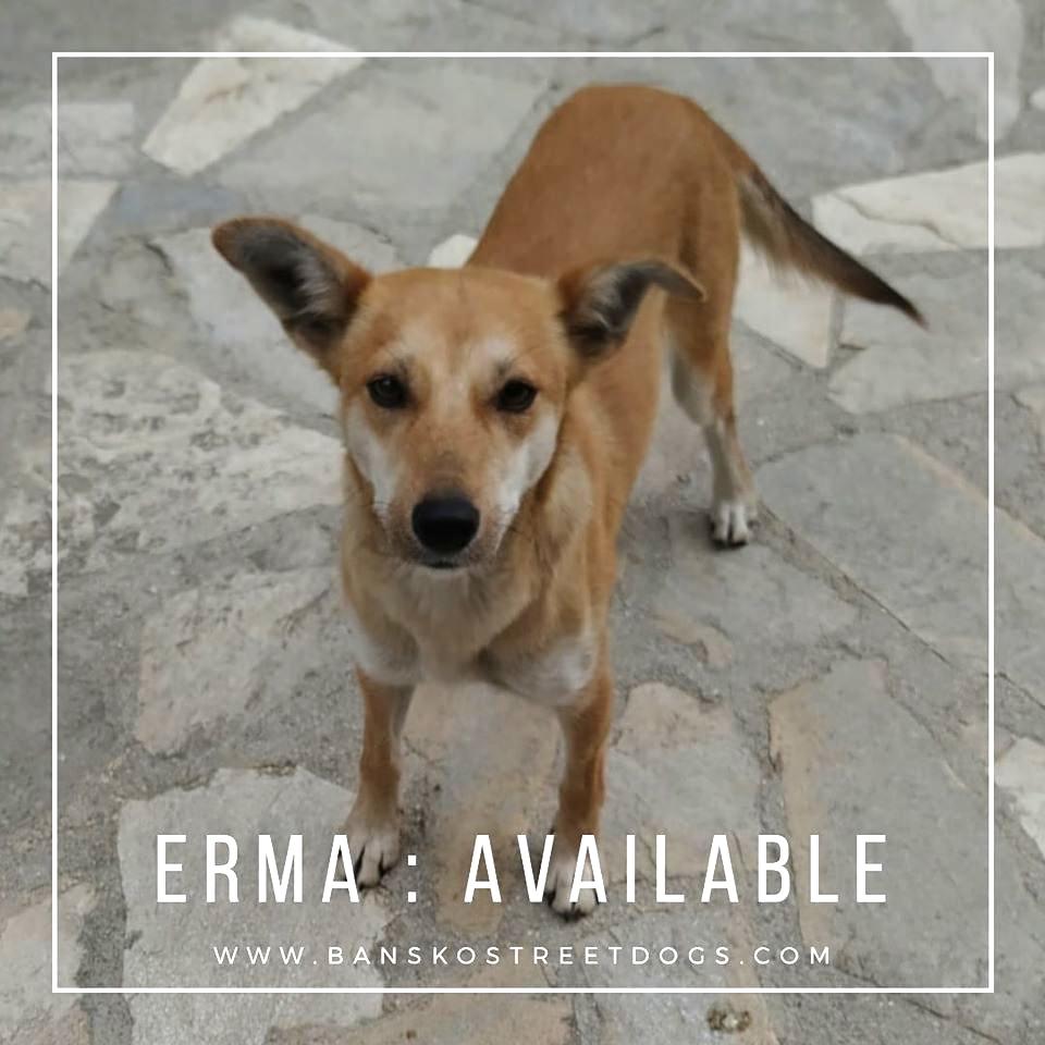 Erma Bansko Street Dogs