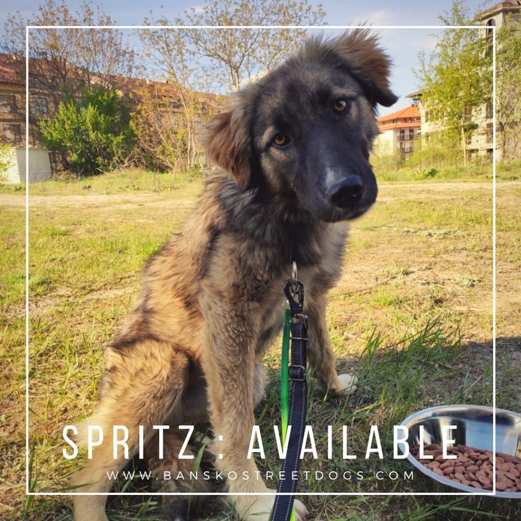 Spritz Bansko Street Dog