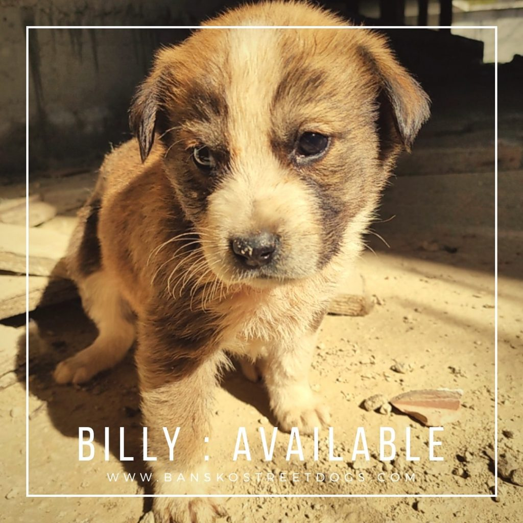 Billy Bansko Street Dogs