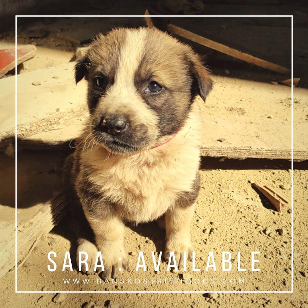 Sara Bansko Street Dogs