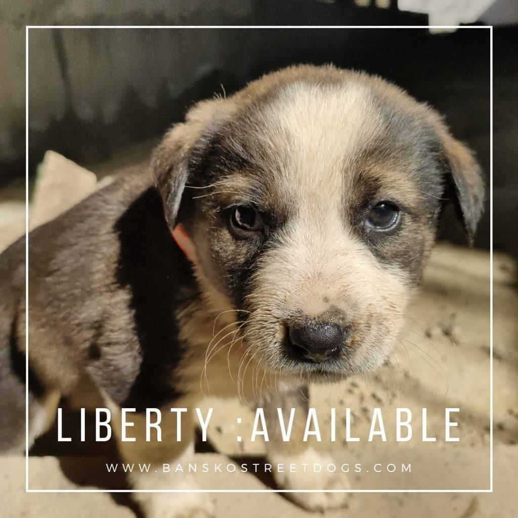 Liberty Bansko Street Dogs