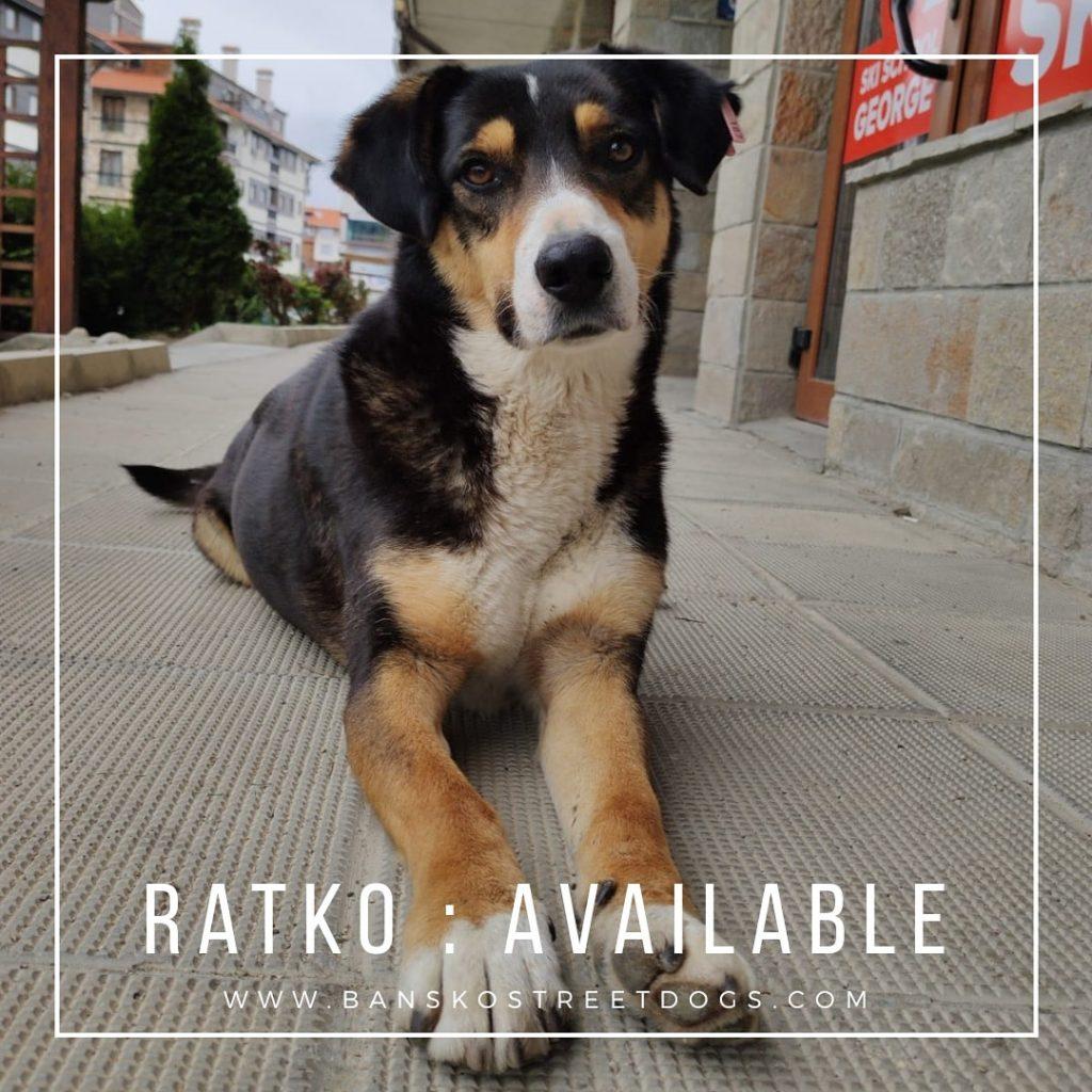 Ratko Bansko Street Dog