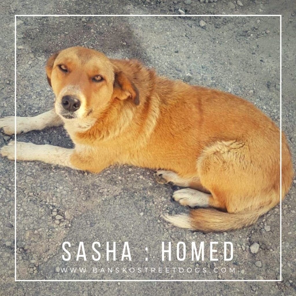Sasha Bansko Street Dogs