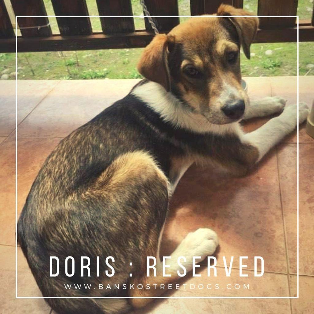 Doris Bansko Street Dog