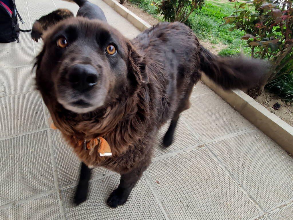 amber_bansko_street_dogs