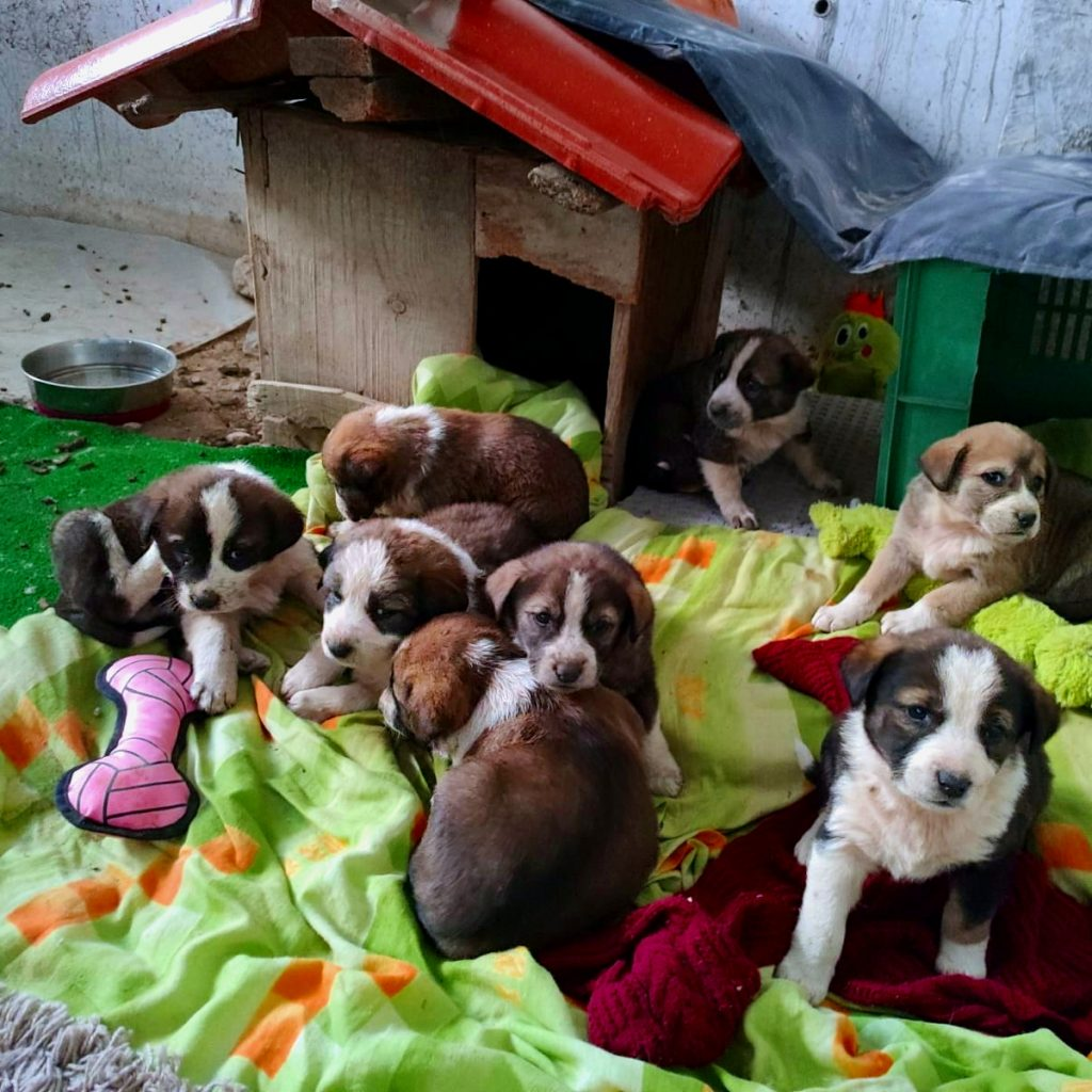 Bansko street dogs towels puppies