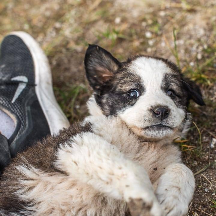 bansko street dog puppy sitting