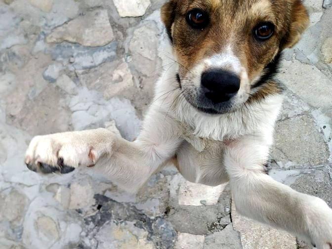 doris_bansko_street_dogs