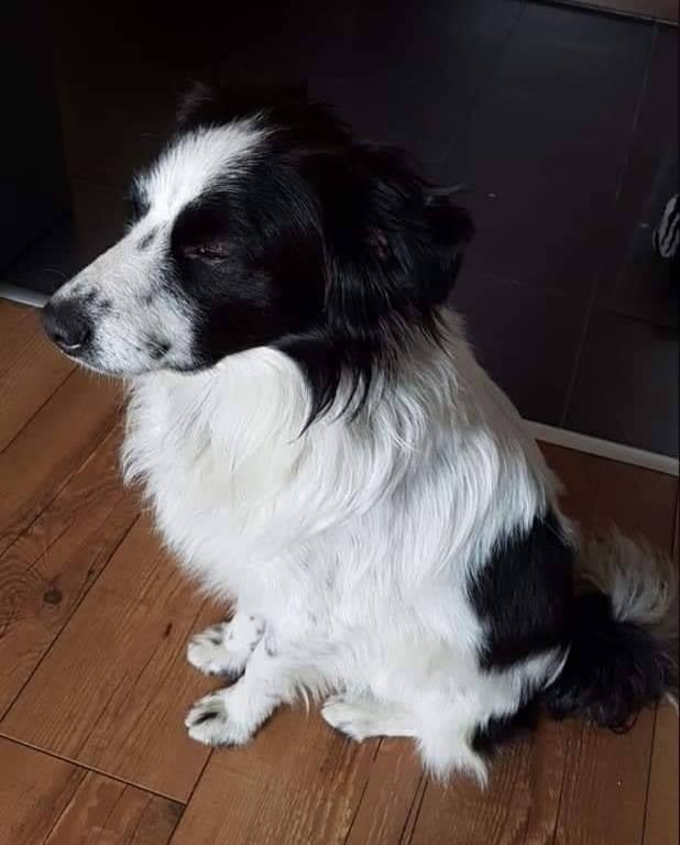 malcho_bansko_street_dog