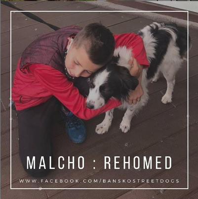 Malcho Bansko Street Dogs