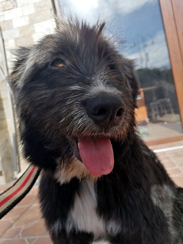 maura_bansko_street-dogs