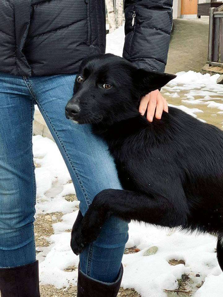 miko_bansko_street_dogs