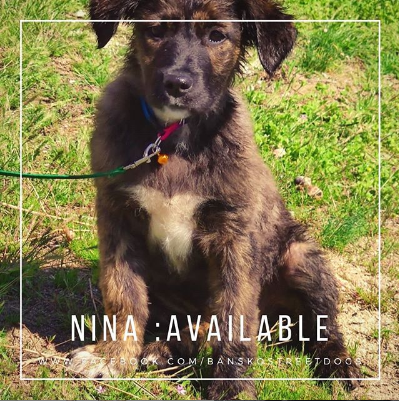 Nina Bansko Street Dogs