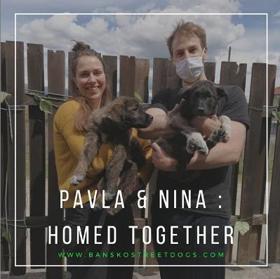 Nina & Pavla Bansko Street Dogs