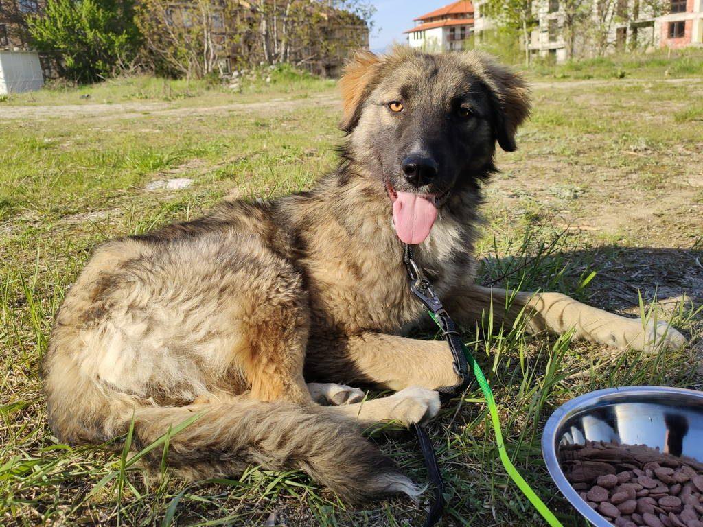 spritz_bansko_street_dogs