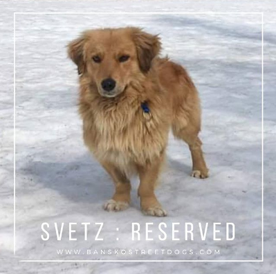 Svetz Bansko Street Dogs