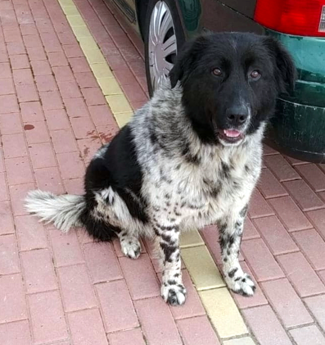 tonka_bansko_street_dogs