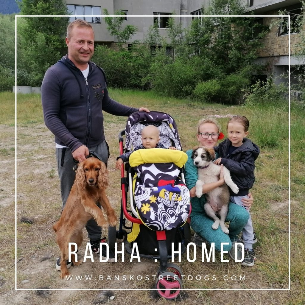 Radha - Bansko Street Dogs
