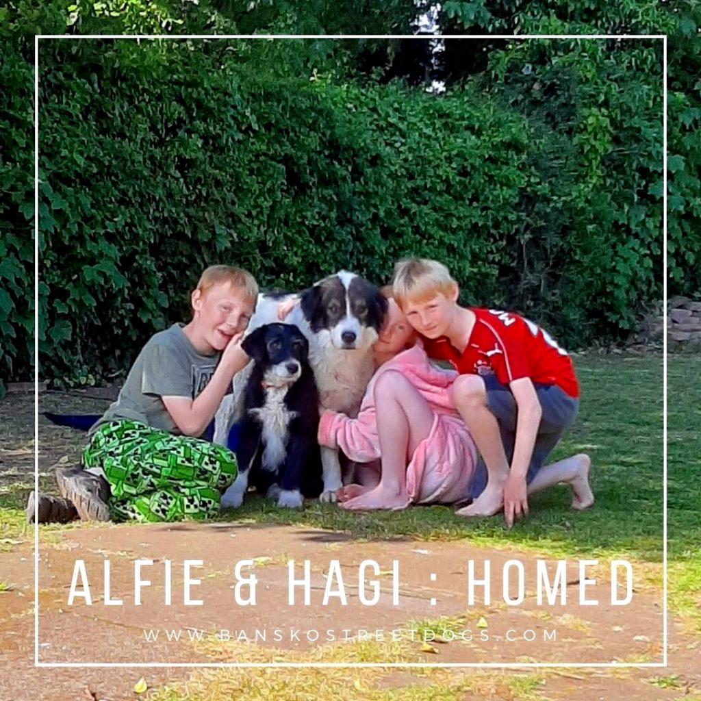 Alfie Hagi Bansko Street Dogs