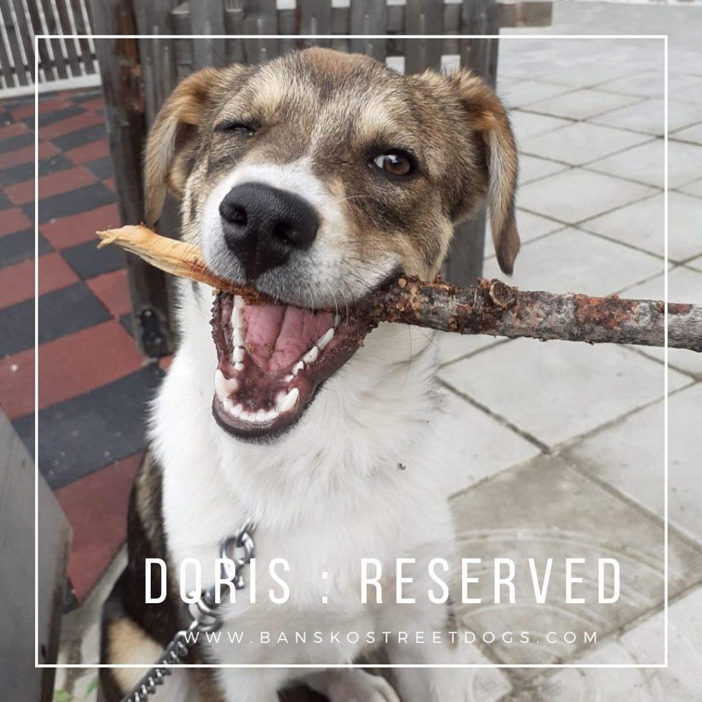 Doris - Bansko Street Dogs