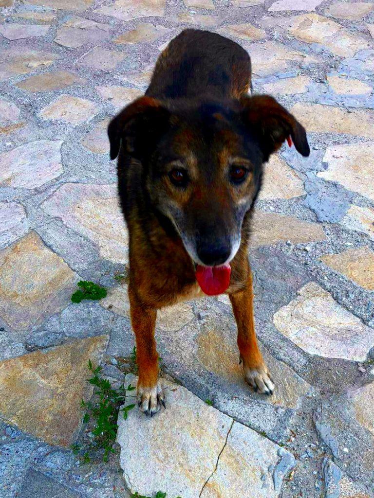Stella - Bansko Street Dogs