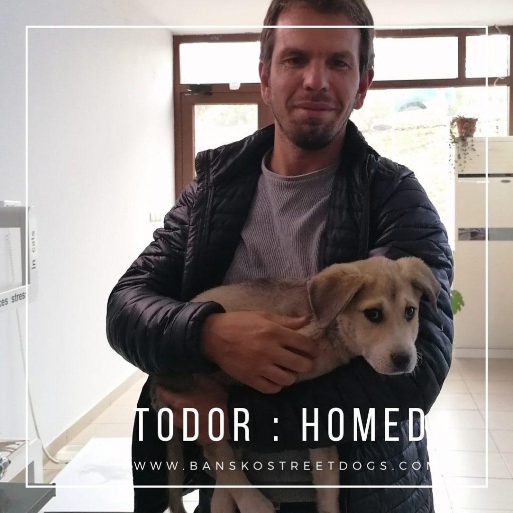 Todor - Bansko Street Dogs