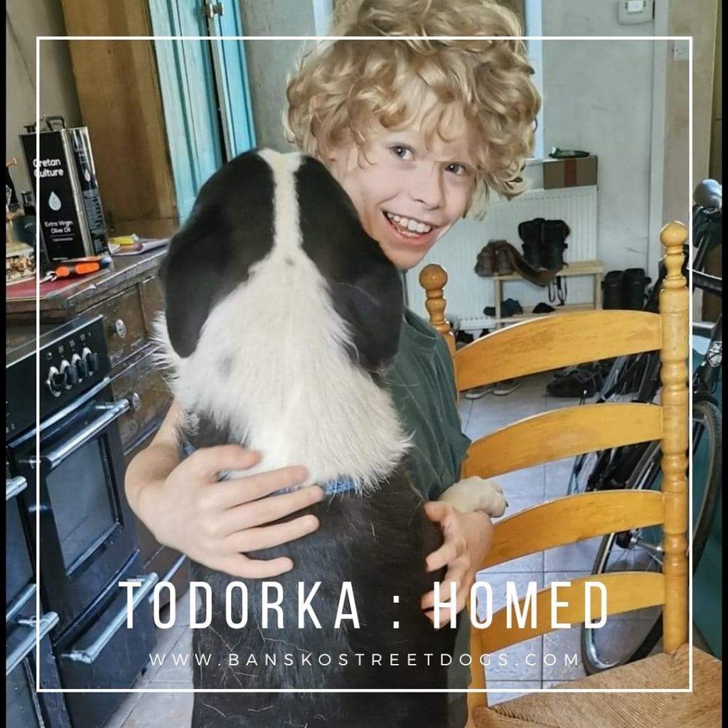 Todorka - Bansko Street Dogs