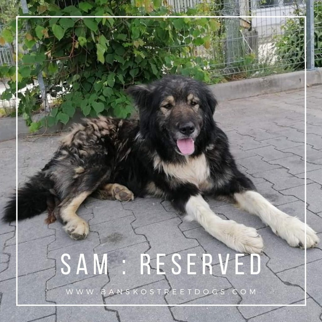 Sam - Bansko Street Dogs