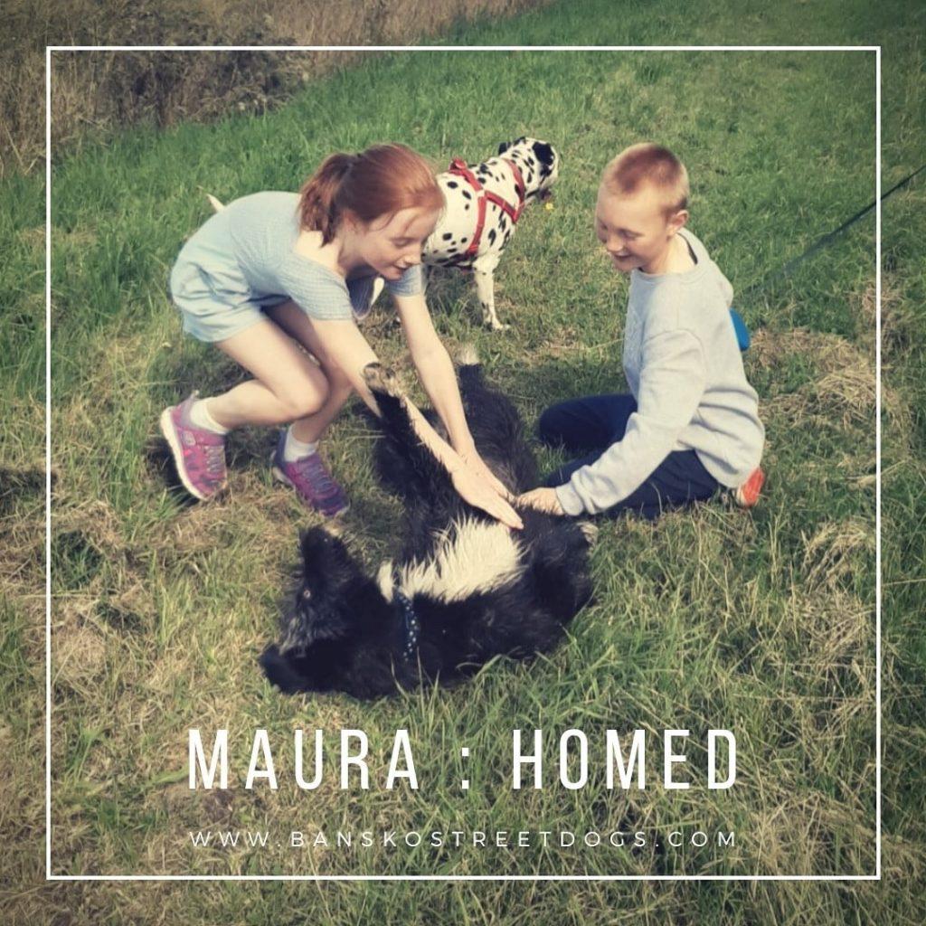 Maura Bansko Street Dogs