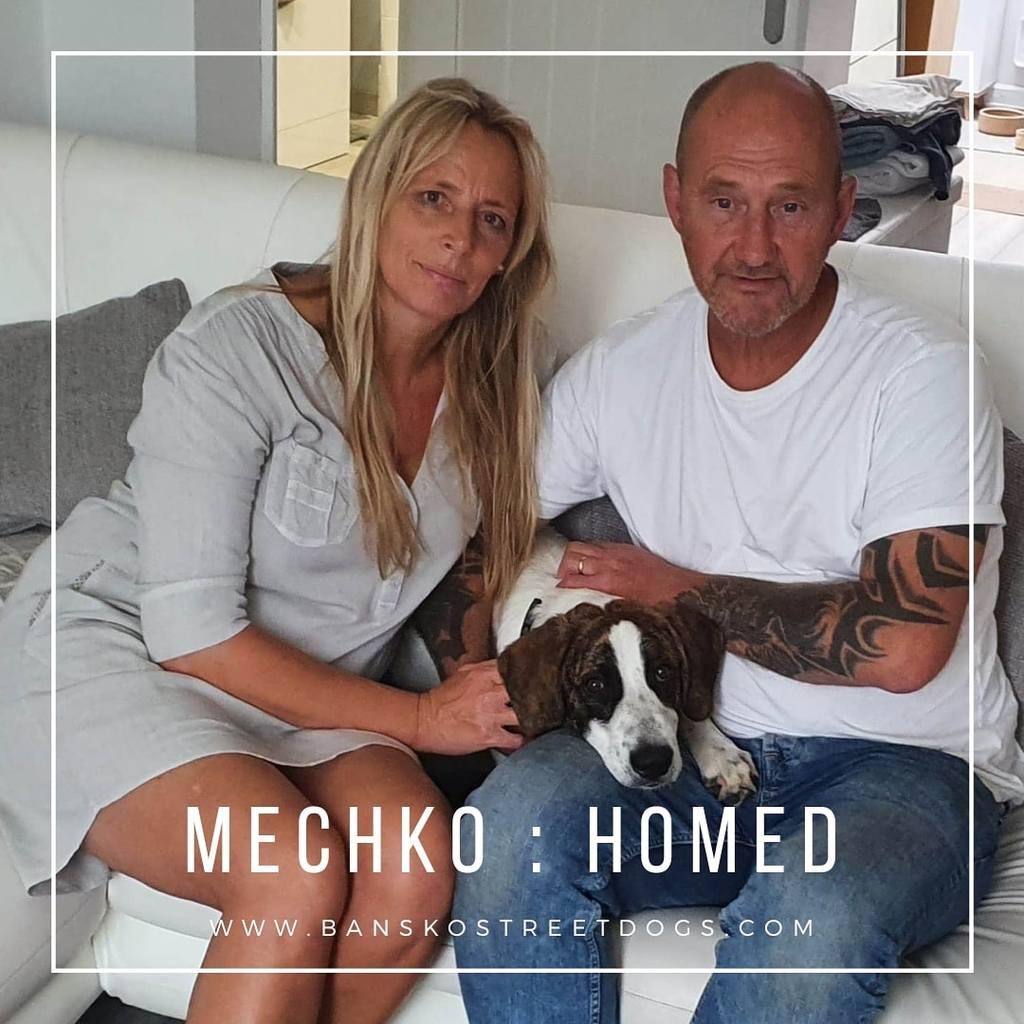 Mechko Bansko Street Dogs