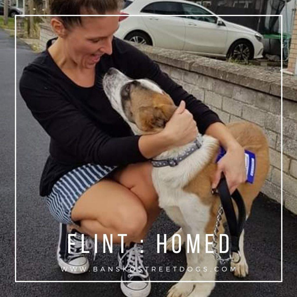 Flint - Bansko Street Dogs