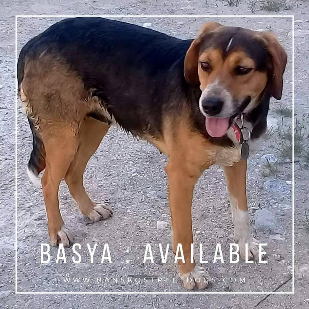 Basya - Bansko Street Dogs