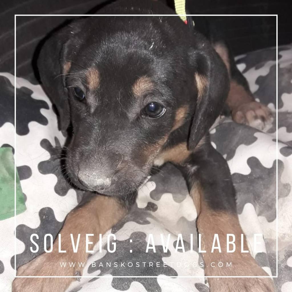 Solveig - Bansko Street Dogs