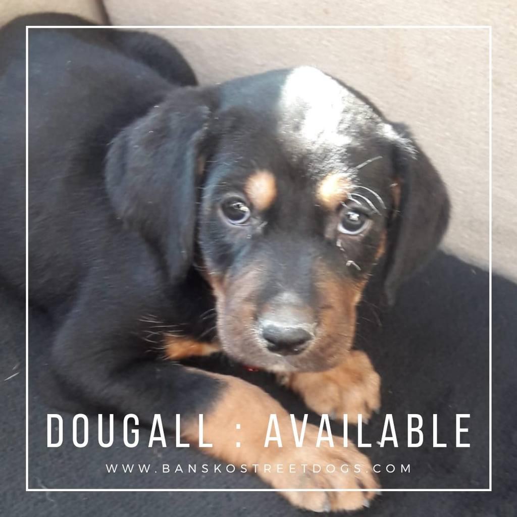 Dougall - Bansko Street Dogs