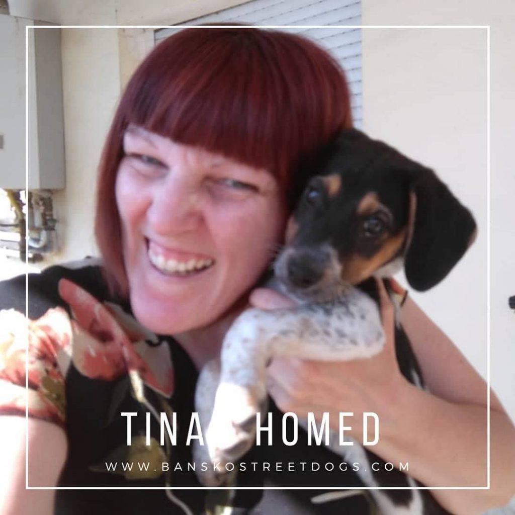 Tina - Bansko Street Dogs homed