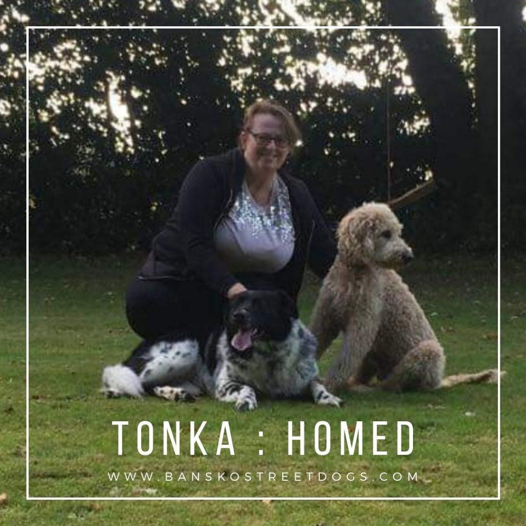 Tonka - Bansko Street Dogs