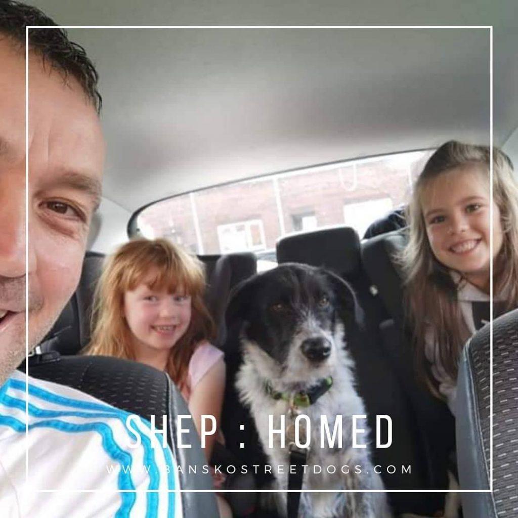 Shep - Bansko Street Dogs Homed