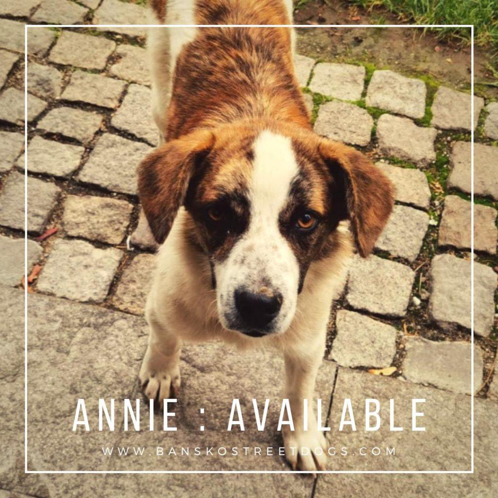 Annie - Bansko Street Dogs