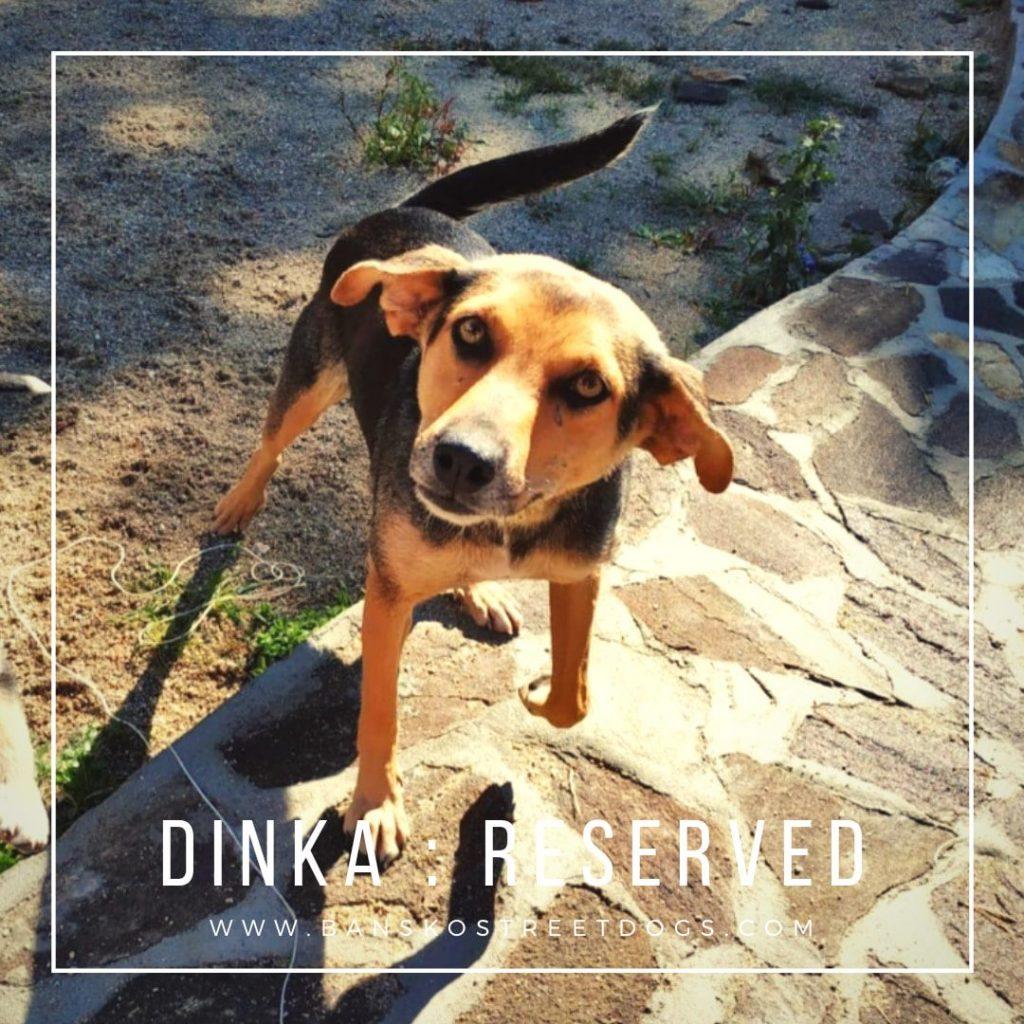 Dinka & Puppies - Bansko Street Dogs