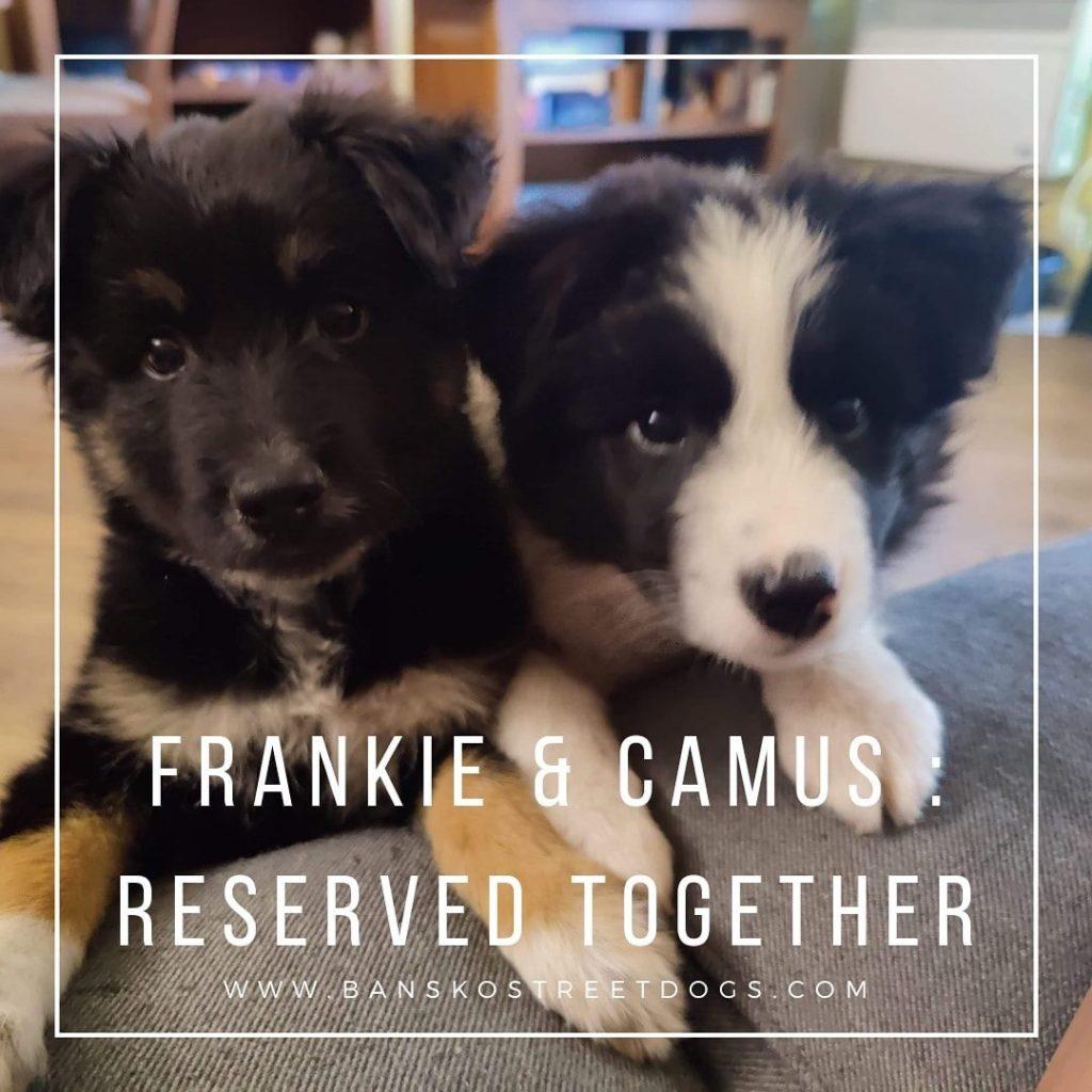 Frankie Camus - Bansko Street Dogs