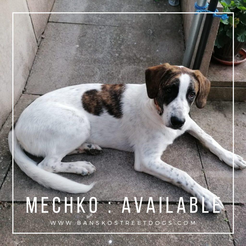 Mechko - Bansko Street Dogs