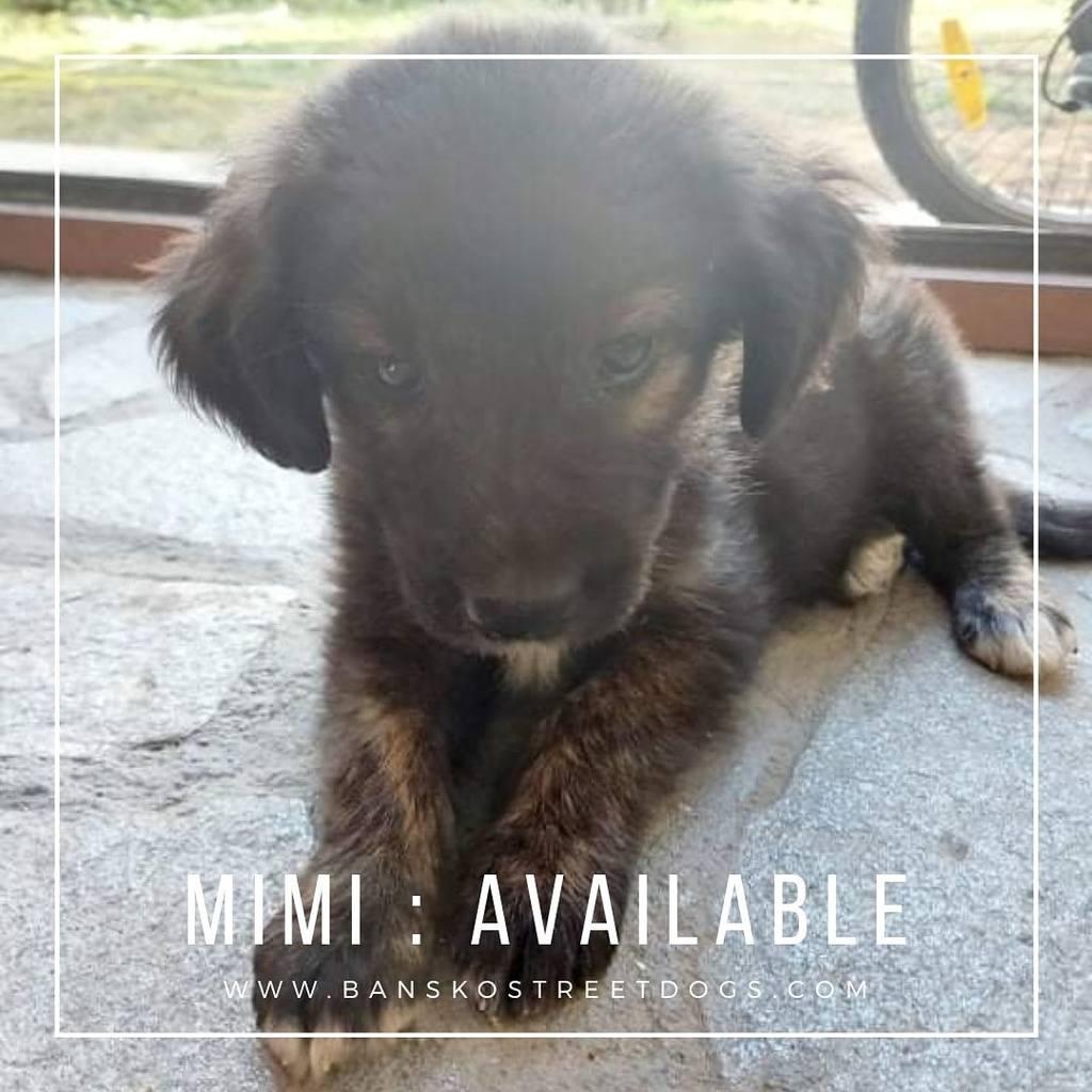Mimi - Bansko Street Dogs