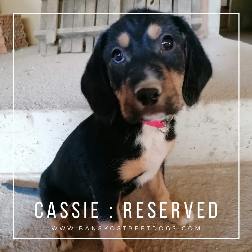 Cassie - Bansko Street Dogs