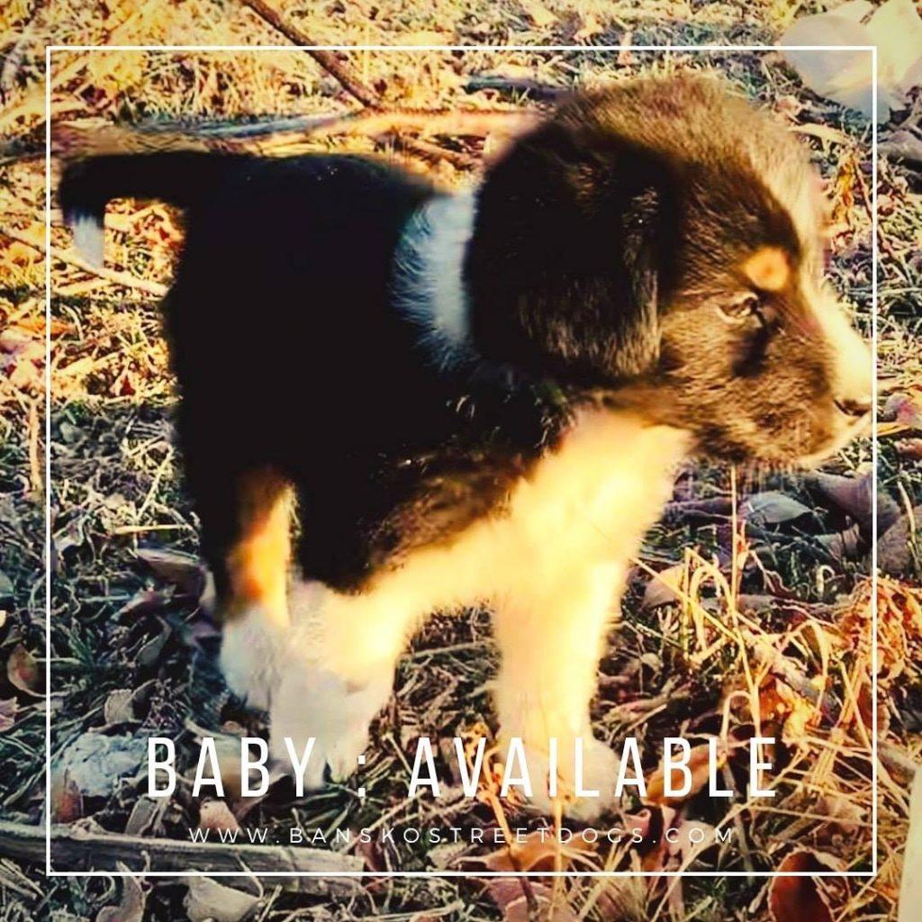 Baby - Bansko Street Dogs Bulgaria