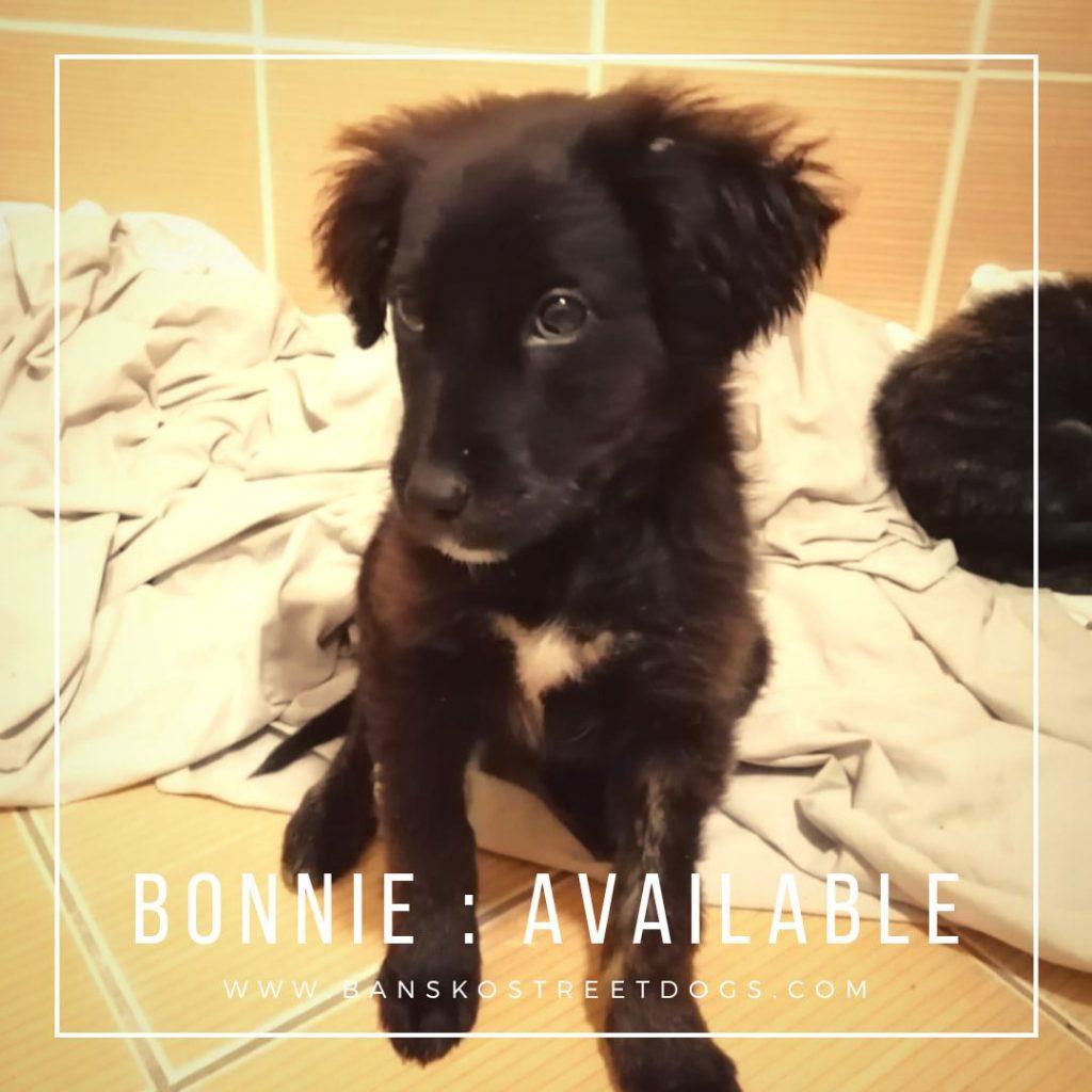 Bonnie - Bansko Street Dogs Bulgaria