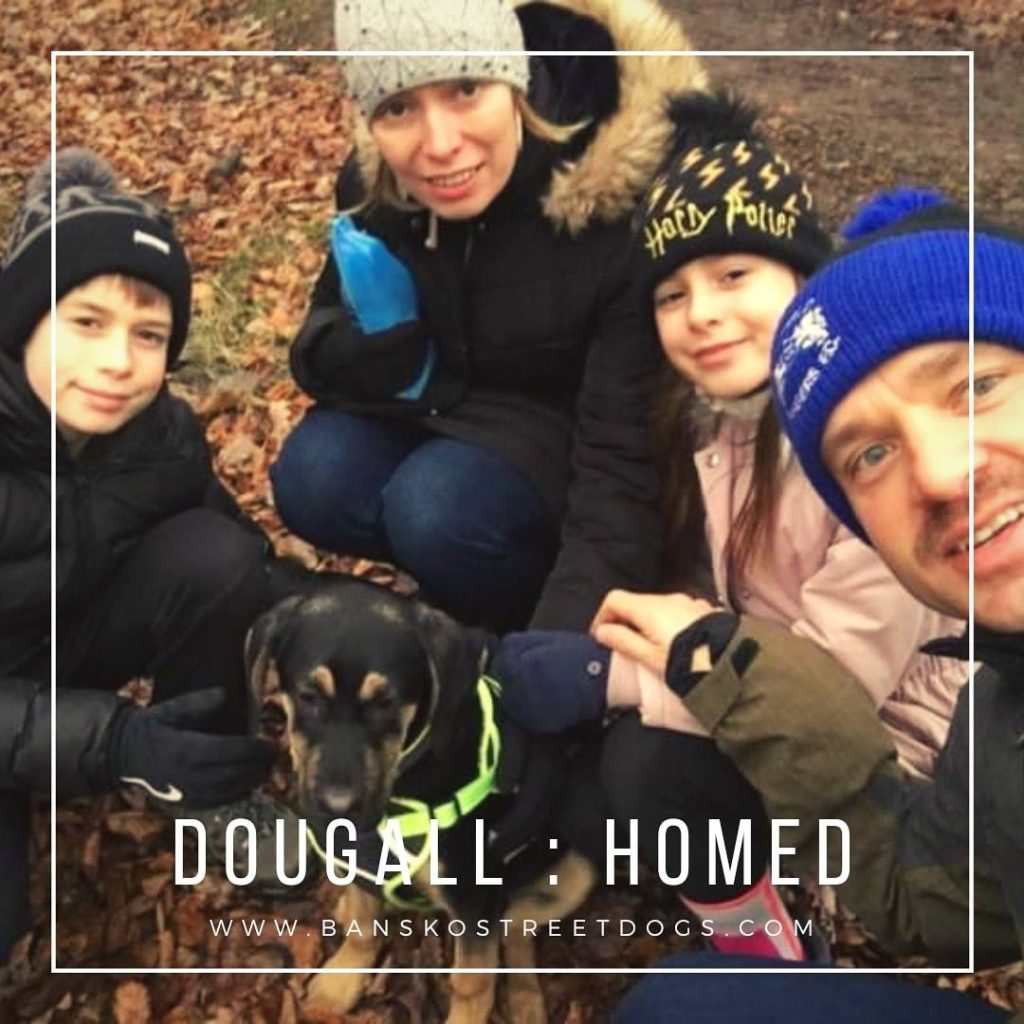 Dougall - Bansko Street Dogs Bulgaria
