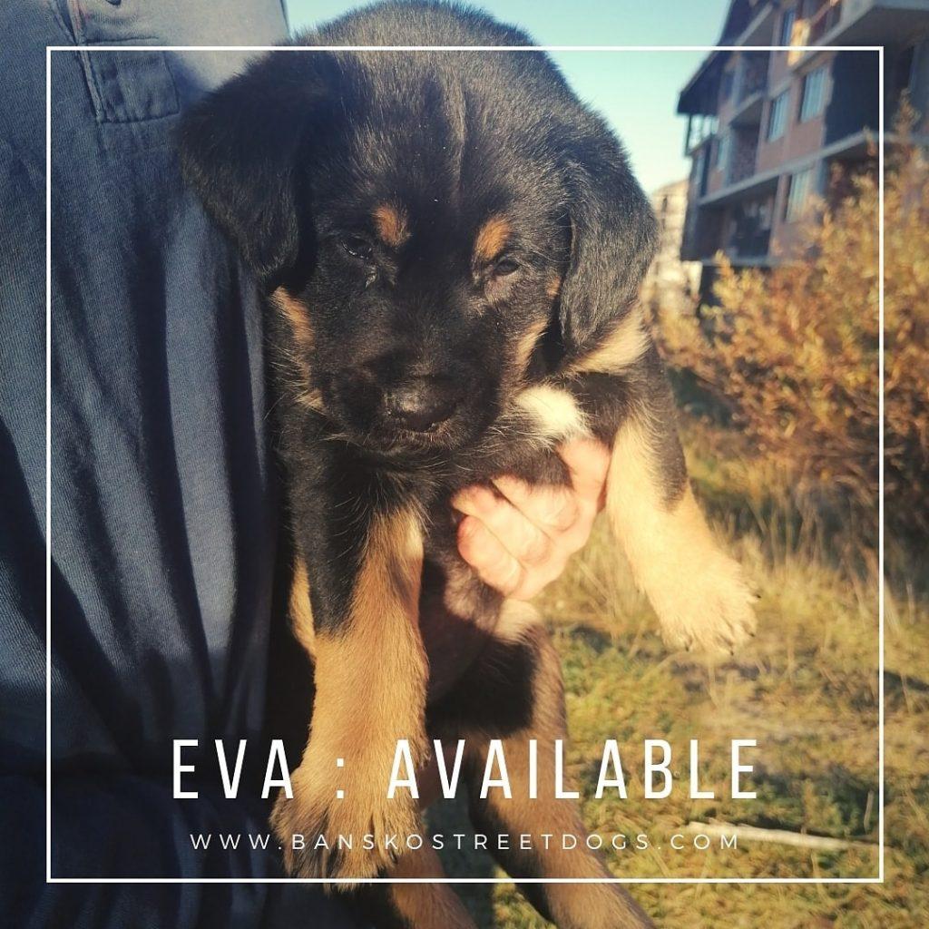 Eva - Bansko Street Dogs Bulgaria