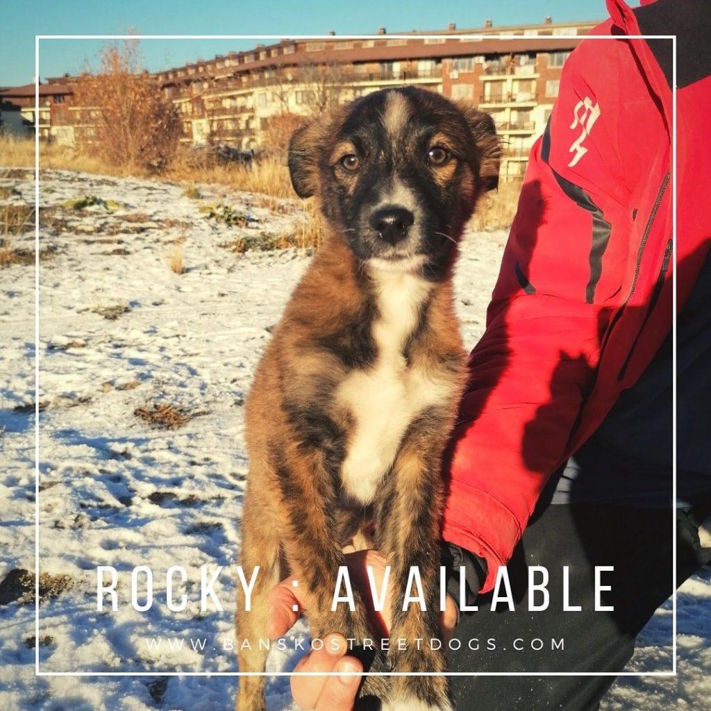 Rocky - Bansko Street Dogs Bulgaria