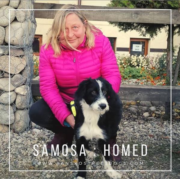 Samosa - Bansko Street Dogs