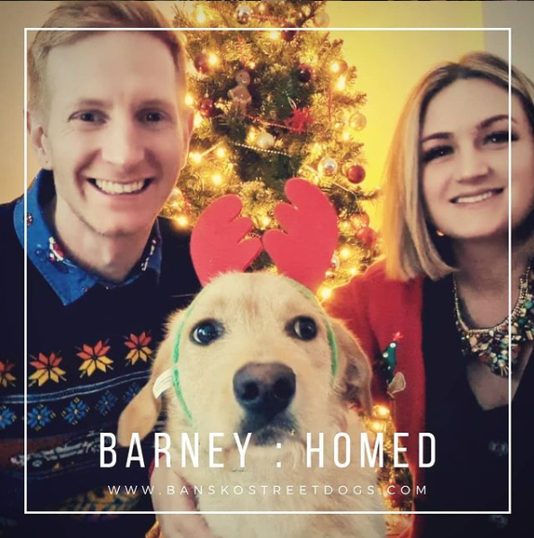 Barney Bansko Street Dogs Bulgaria Homed